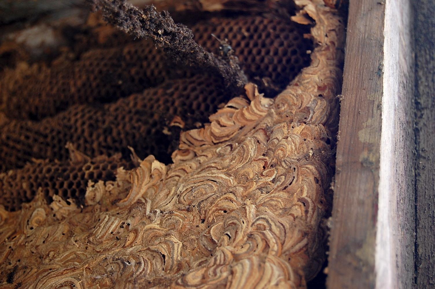 richtfest beim dachbau das reh im garten gartenblog. Black Bedroom Furniture Sets. Home Design Ideas