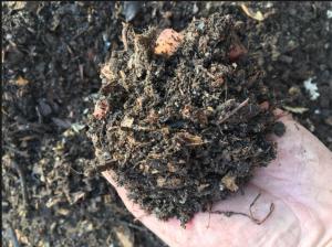 Kompost_B
